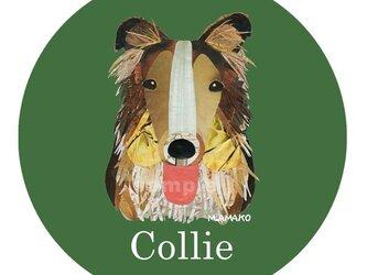 ラフ・コリー《犬種名ステッカー/大型犬》の画像