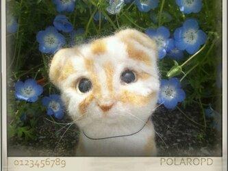 羊毛猫ちゃん~スコテッシュフォールドの画像