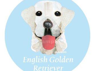 英国ゴールデン・レトリバー《犬種名ステッカー/大型犬》の画像
