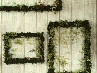 Green Frame『 M 』の画像