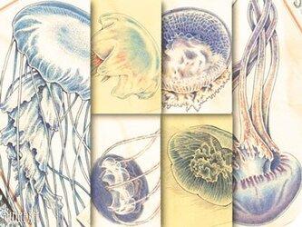 くらげ標本図ポストカード:第2集の画像