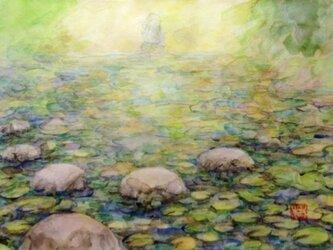 「睡蓮」の画像