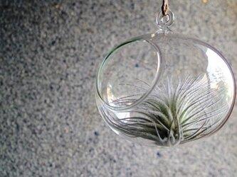 ガラスオーバル ×テクトラムの画像