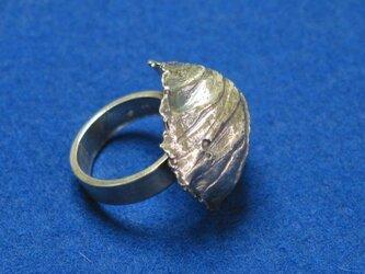 キャベツの指輪の画像