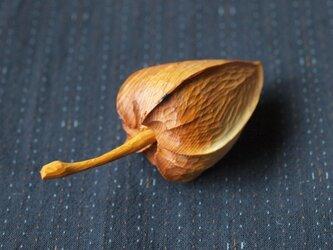 木のほおづき (大)イチイの画像