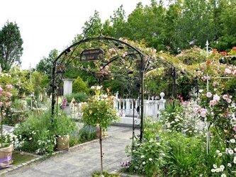 ガーデンローズアーチの画像