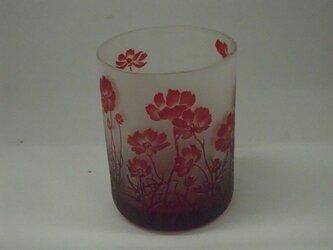コスモスグラスの画像