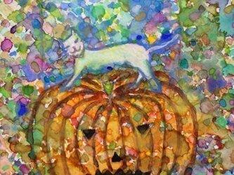 cat on a pumpkinの画像