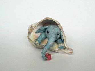 貝がら ミニチュア 象の画像