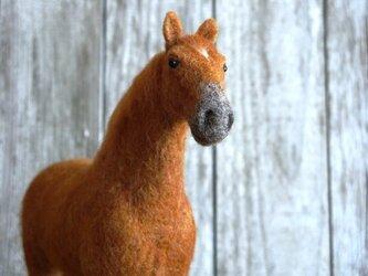栗毛の馬の画像