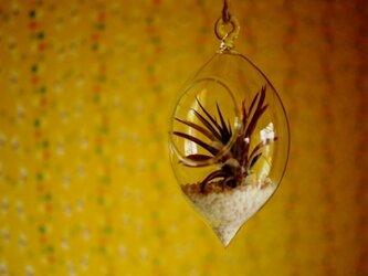 ガラスレモン ×アブディダの画像