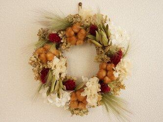 ケイトウ 紫陽花 green wreathの画像