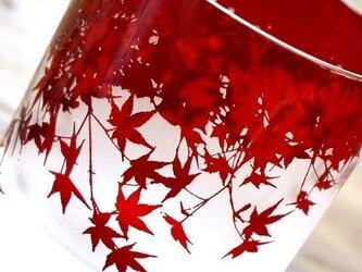紅葉グラスの画像