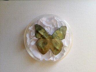 標本ブローチ(ウラベニタテハ)の画像