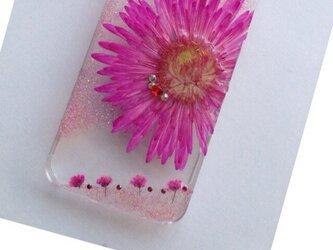 iPhone5/6 pink pressed flowerの画像