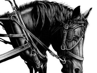 輓馬(ペン画)の画像