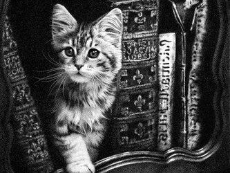 猫と本棚(ペン画)の画像
