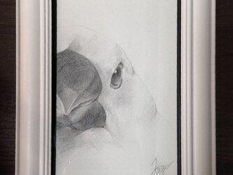 [リクエスト]s様 文鳥 - white -の画像