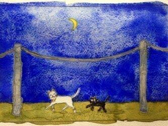 月夜のお散歩の画像
