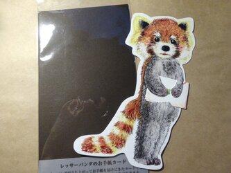 レッサーパンダのお手紙カードの画像