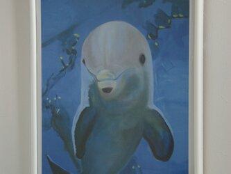 ジュピターくん (海からの友達)の画像
