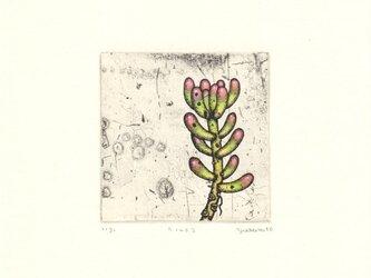 多肉植物の銅版画02 カラータイプ1の画像