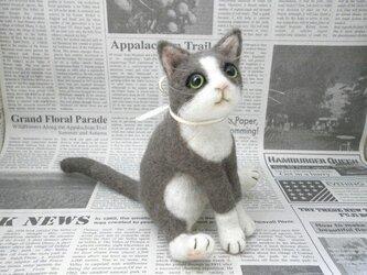 ◆猫ちゃん◆の画像