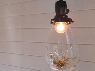ランプ型テラリウム「air-rium」ten-drop 時澤真美の画像