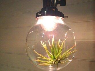 ランプ型テラリウム「air-rium」 s-ship 時澤真美の画像