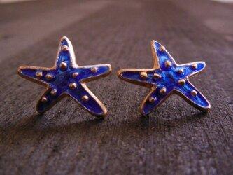 Starfish Pierce/Blueの画像