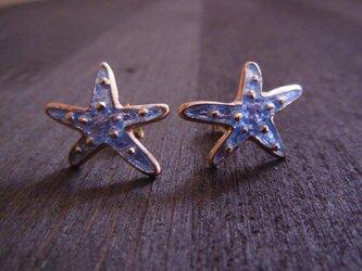 Starfish Pierce/Aquaの画像