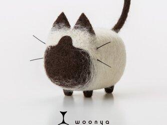 woonya【siamese】の画像