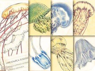 くらげ標本図ポストカード:第3集の画像