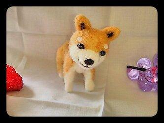 羊毛フェルトの柴犬くんの画像