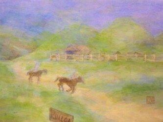 クアロア牧場の画像