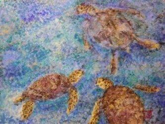 ウミガメ会議の画像