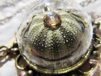ウニ ガラスドームのペンダントの画像