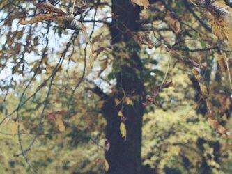 【額付写真】秋深し。の画像