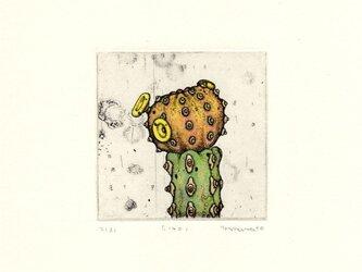 多肉植物の銅版画01 カラータイプ2の画像