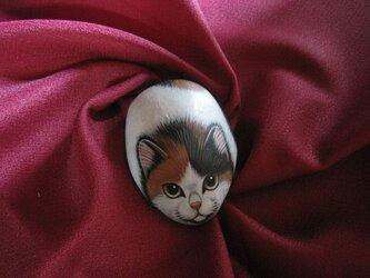 石猫  「視線の先にあるものは・・・」の画像