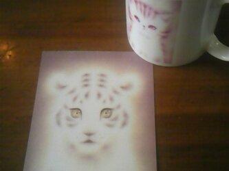 赤ちゃんトラのポストカードの画像