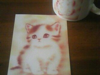 こねこのポストカードⅡの画像