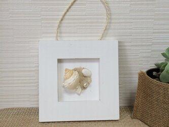 ホワイトフレーム  カムリボラの画像