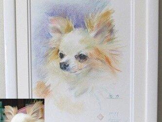 ペットの肖像画 パステル画(八切判)オーダーメイドの画像