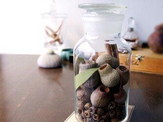 "Botanical Bottle ""Eucalyptus""の画像"