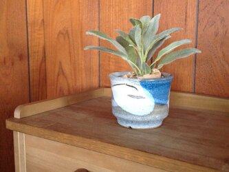 多肉とミニグリーンの植木鉢の画像