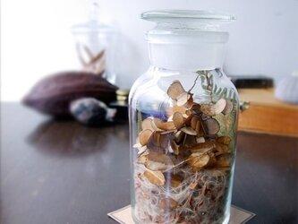 "Botanical Bottle ""Pteridophyta""の画像"