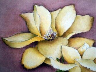 中国工筆画 木蓮の画像