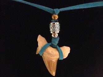 お守りシリーズ☆サメの化石のネックレス8の画像