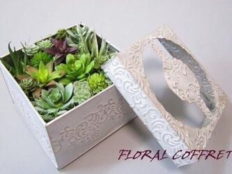 多肉植物(サキュレント)のギフトボックスの画像